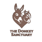 Link to the Sidmouth Donkey Sanctuary Sidmouth